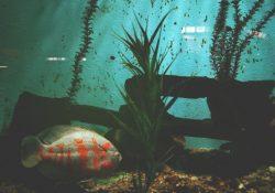 Juwel akvarier er nemme at flytte på og derfor perfekte til dit hjem