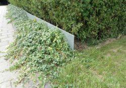 Sådan bekæmper du en af din haves største fjender - sneglen